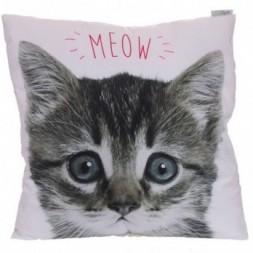 Kitten Cushion