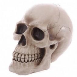 Lifesize Human Skull Money Box