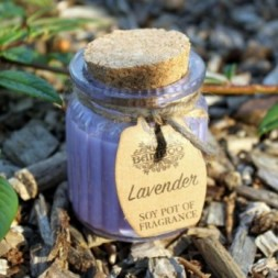 2x Lavender Soy Pot of Fragrance Candles