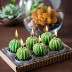 Cactus, Barrell,  Tealights in Gift Box