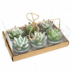 Cactus, Agave,  Tealights in Gift Box
