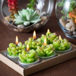Cactus, Succulent,  Tealights in Gift Box